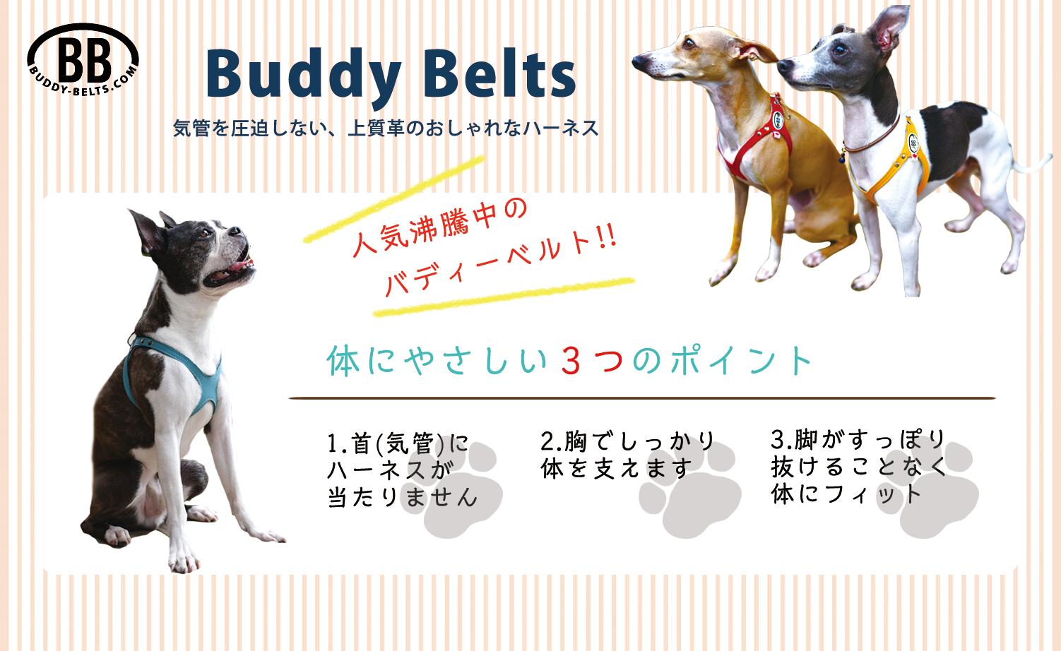 BuddyBeltsの特徴